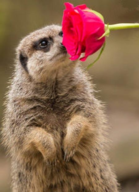 عکس های دیدنی در دنیای رمانتیک حیوانات