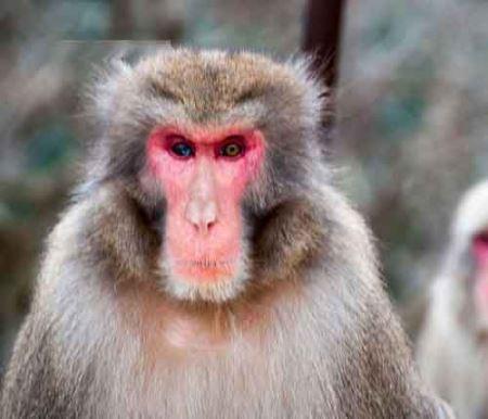عکس هایی جالب از حیوانات چشم دو رنگی