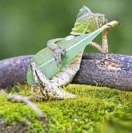 عکس مارمولک گیتار زن سوژه جهانی شد!