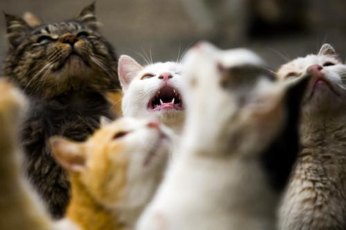 تصاویر دیدنی از جزیره گربه ها در ژاپن