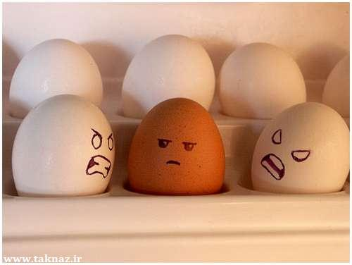 عکس های جالب و دیدنی از تخم مرغ ها