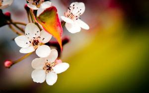 شعر زیبای بهار آمد و رفت ماه سپند