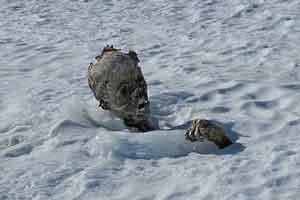 کشف جسد مدفون شده در برف از 55 سال پیش (+عکس)