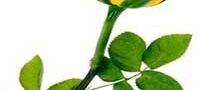 شخصیت شناسی از روی گل