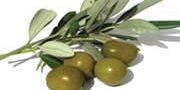 5 خاصیت مفید برگ زیتون