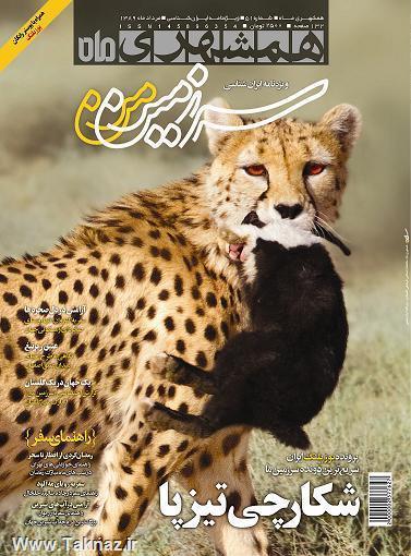 همه چیز در مورد یوزپلنگ ایران + تصاویر