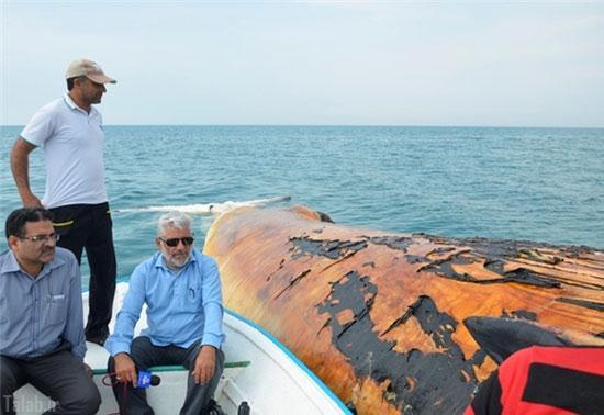تصاویر پیدا شدن لاشه نهنگ در بوشهر