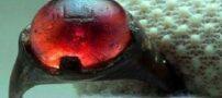 انگشتری چند هزار ساله با نام الله روی آن