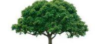 داستان قصه ی درخت جاودانگی