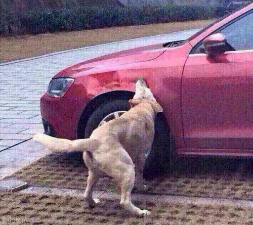 انتقام گرفتن سگ ولگرد از مرد چینی + عکس