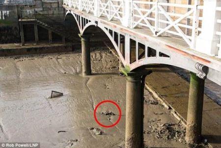 ترس مردم از جسدی در کنار رودخانه (عکس)