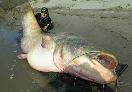 صید ماهی غول پیکر 127 کیلویی + تصاویر