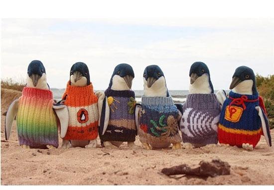بافتن لباس برای پنگوئن ها و نجات جان آنها + عکس