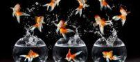 علت مرگ ماهی قرمز عید