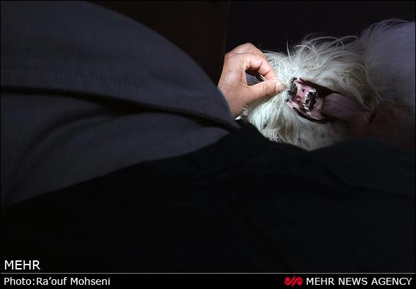 تصاویری از کلینیک مجهز حیوانات در ایران