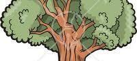 داستان درخت بخشنده و مهربان
