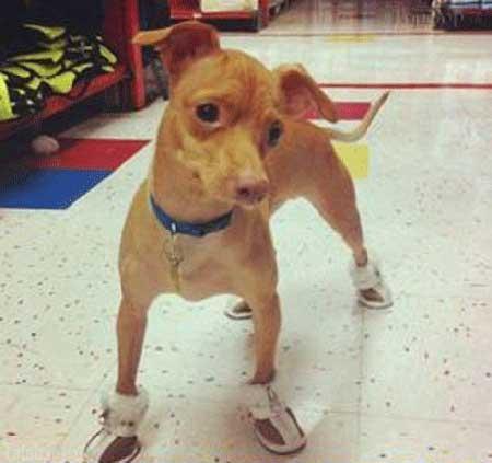 عکس های دیدنی از زشت ترین سگ دنیا