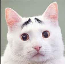 گربه جالبی که ابرو دارد (عکس)