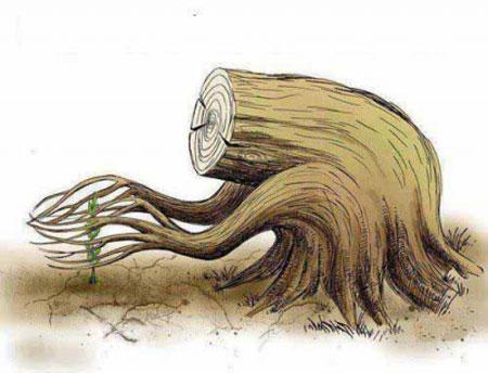 کاریکاتور روز درختکاری ( تصویری)