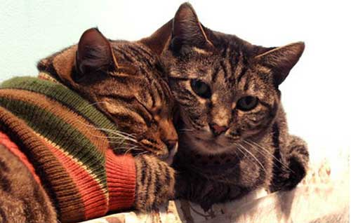 عکس های گربه هایی که لباس می پوشند