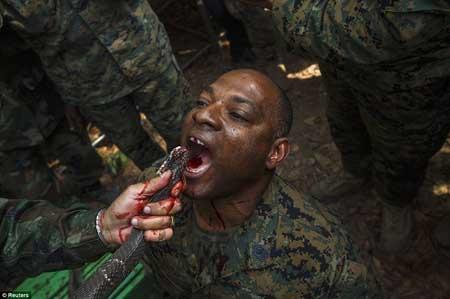 تصاویری از تمرین زنده ماندن با خوردن خون مار کبری