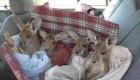 عکس های جالب مرکز نگهداری کانگوروهای یتیم در استرالیا