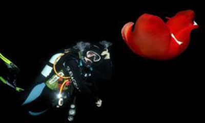 تصاویری عجیب از اعماق دریای سرخ + عکس