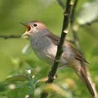 شخصیت شناسی از روی پرندگان
