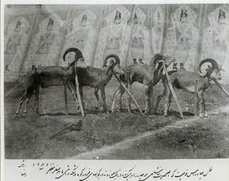عکسی از شکارگاه سلطنتی ناصرالدین شاه