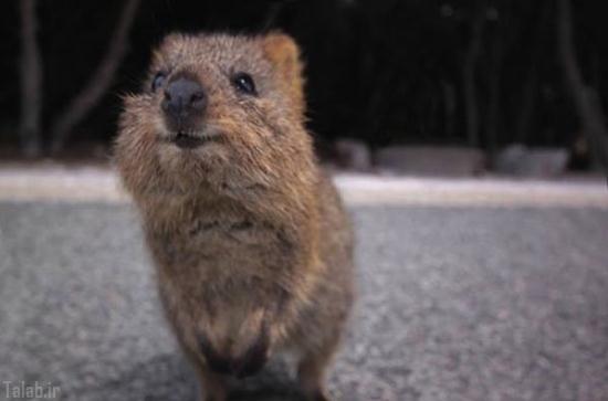 عکس های بامزه از شادترین حیوان دنیا