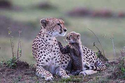 عکس های جالب از بچه های حیوانات