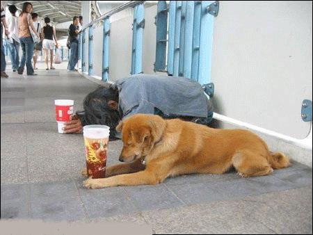 جالب ترین طنز خواندنی دل سگ