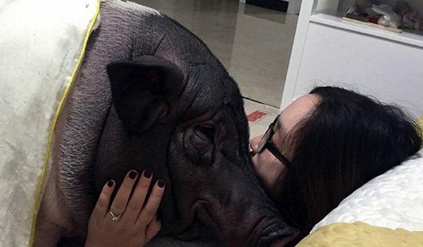دختری که عاشق یک خوک شده است + عکس