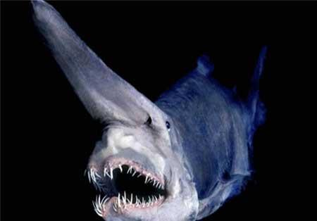 تصاویری جدید از وحشتناک ترین موجودات و هیولاهای دریایی