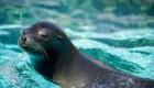 تصاویر جالب از حمام کردن شیرهای دریایی