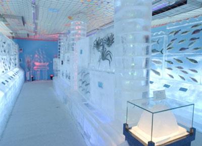تصاویر دیدنی از آکواریوم یخی در ژاپن