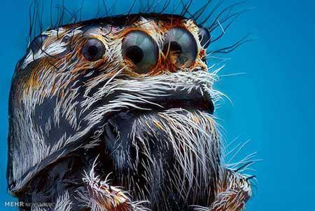 عکس های زیبا از حیوانات با عکاسی ماکرو
