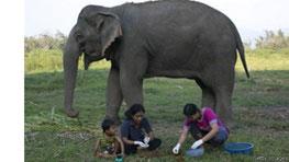 گرانترین قهوه دنیا با مدفوع فیل