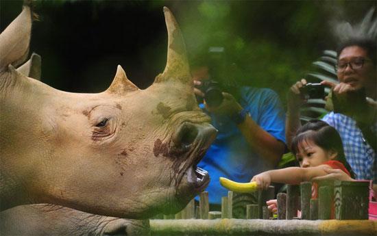 عکس هایی دیدنی از دنیای حیات وحش و حیوانات 2020