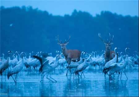 تصاویر جالب و دیدنی از حیوانات (94)