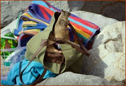 تصاویری از یک سنجاب در حال دزدی کردن