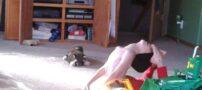 اینا بچه هستن یا گودزیلا ( عکس های جالب )