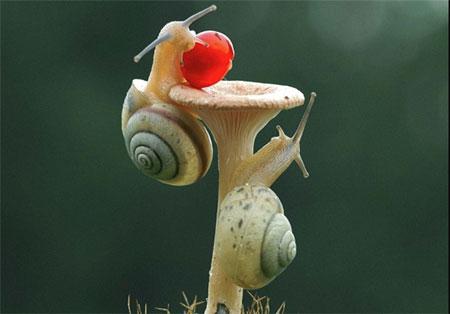 عکس های بسیار جالب از تقلای حلزون