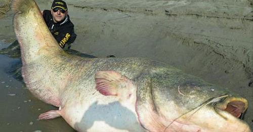 جسد یک سرباز در شکم ماهی غول پیکر + عکس