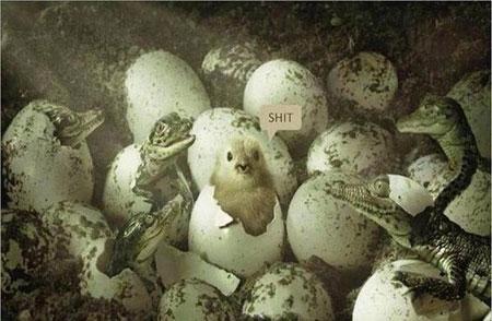 خفن ترین عکس های طنز و خنده دار جهان (24)