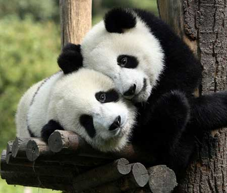عکس های بامزه و خنده دار از حیوانات (5)