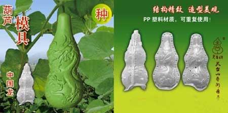 پرورش میوه و سبزیجات عجیب در چین (+عکس)