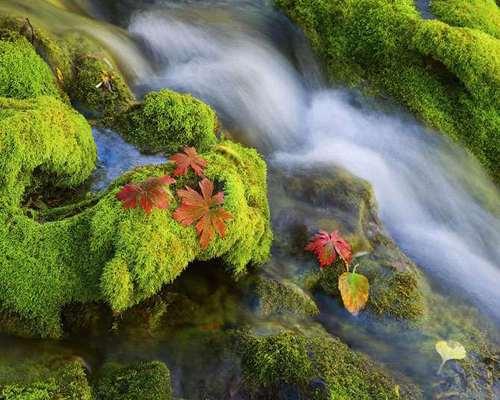 عکس های ناب و جدید از طبیعت بکر (21)
