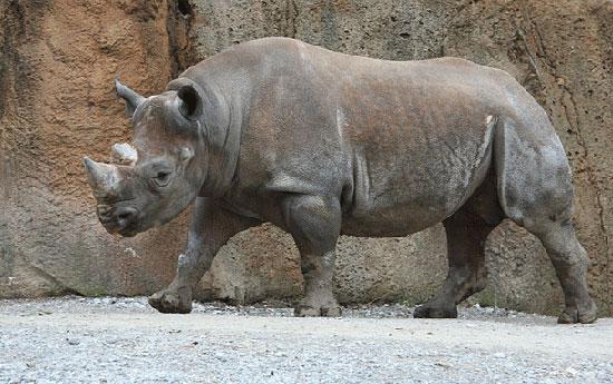 آشنایی با خطرناکترین حیوانات جهان (+ عکس)