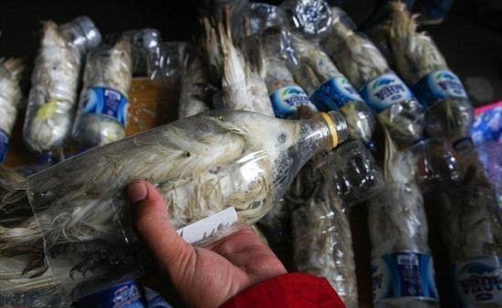 تصاویر باورنکردنی از قاچاق طوطی در بطری